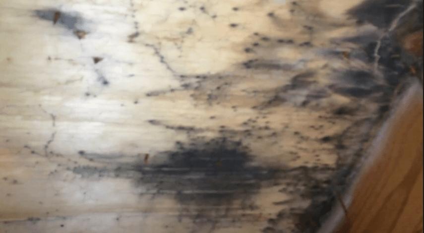Attic Mold Removal Wood Dale Il