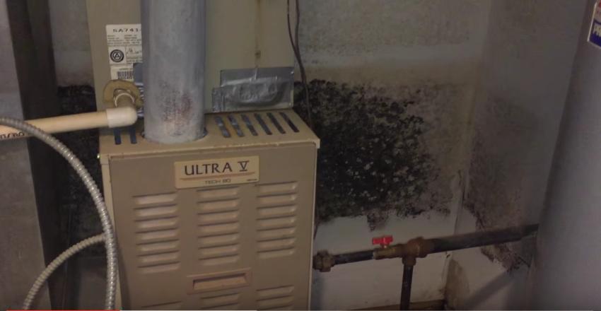attic mold vs ceiling mold vs basement mold mold removal illinois