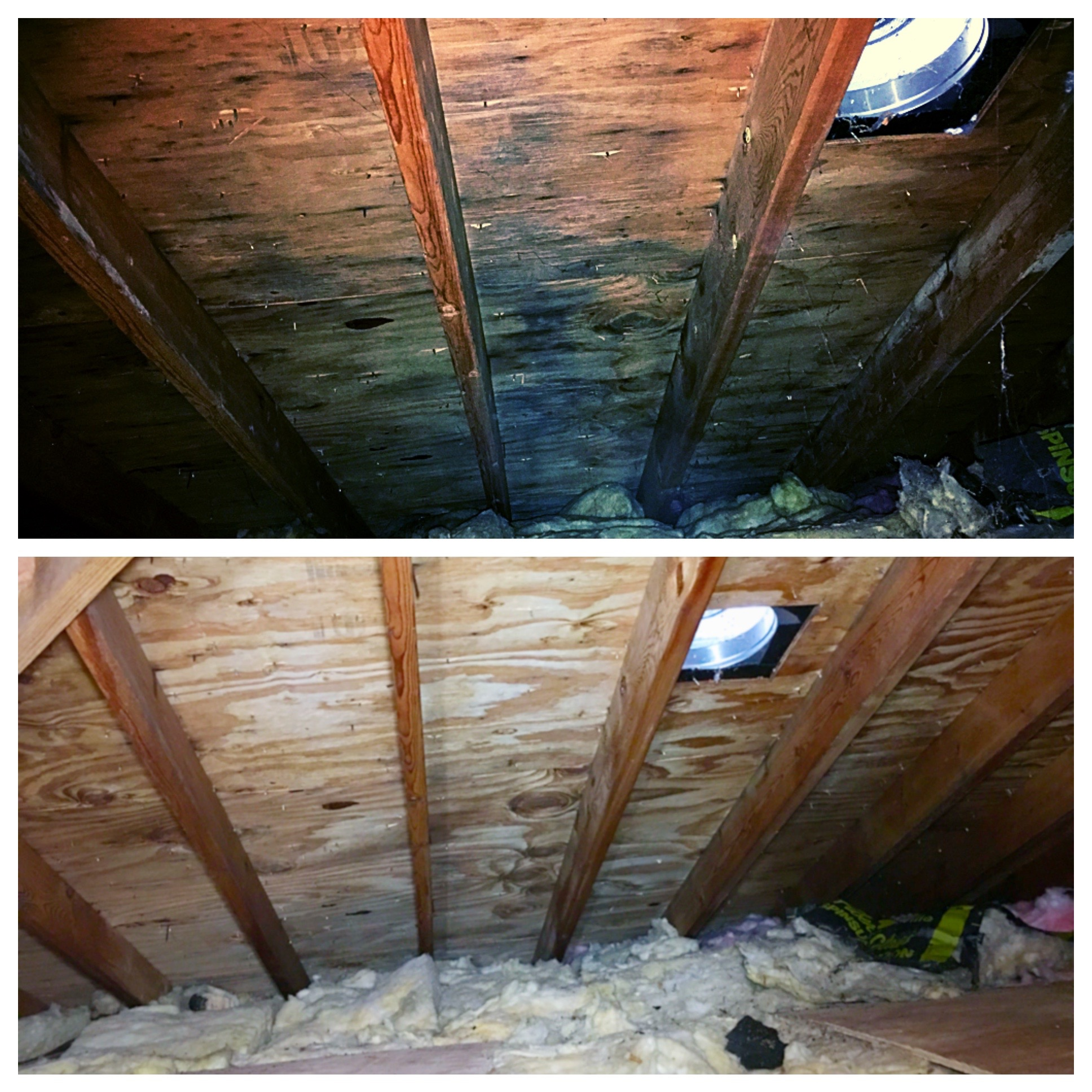 Making Attic Mold Stains Completely Disappear Mold